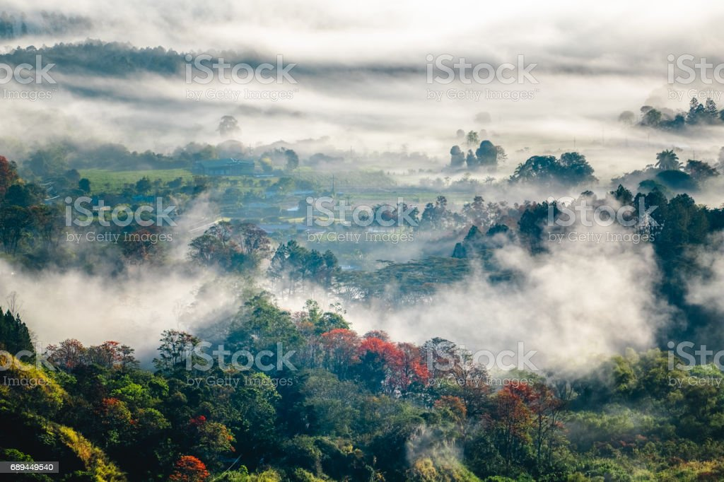 Forest in the haze stock photo