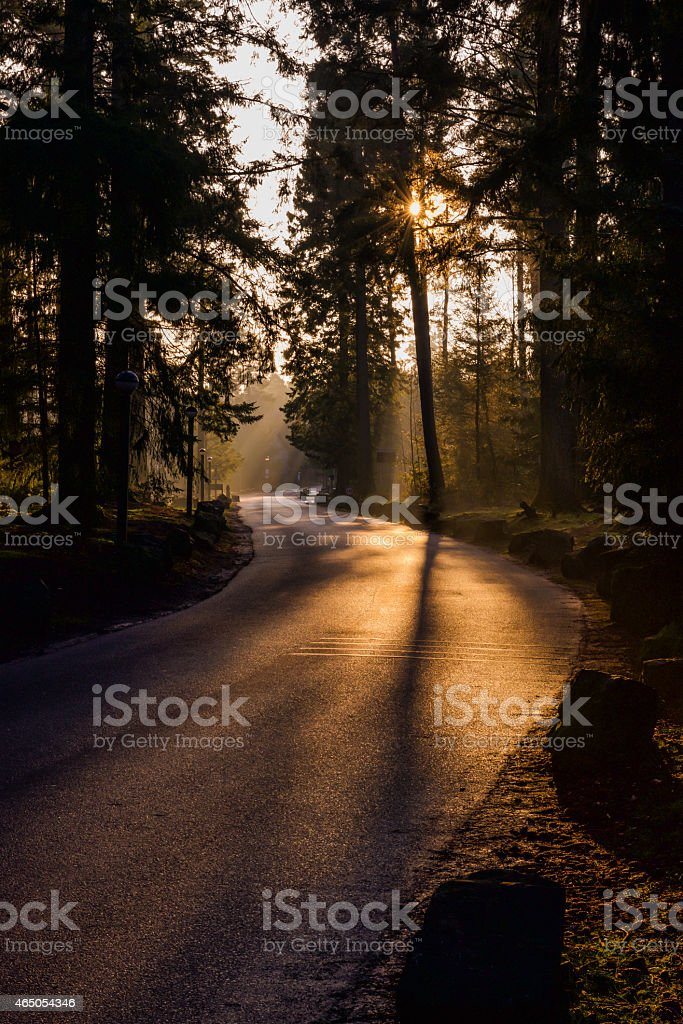 Forest in the morning light stock photo