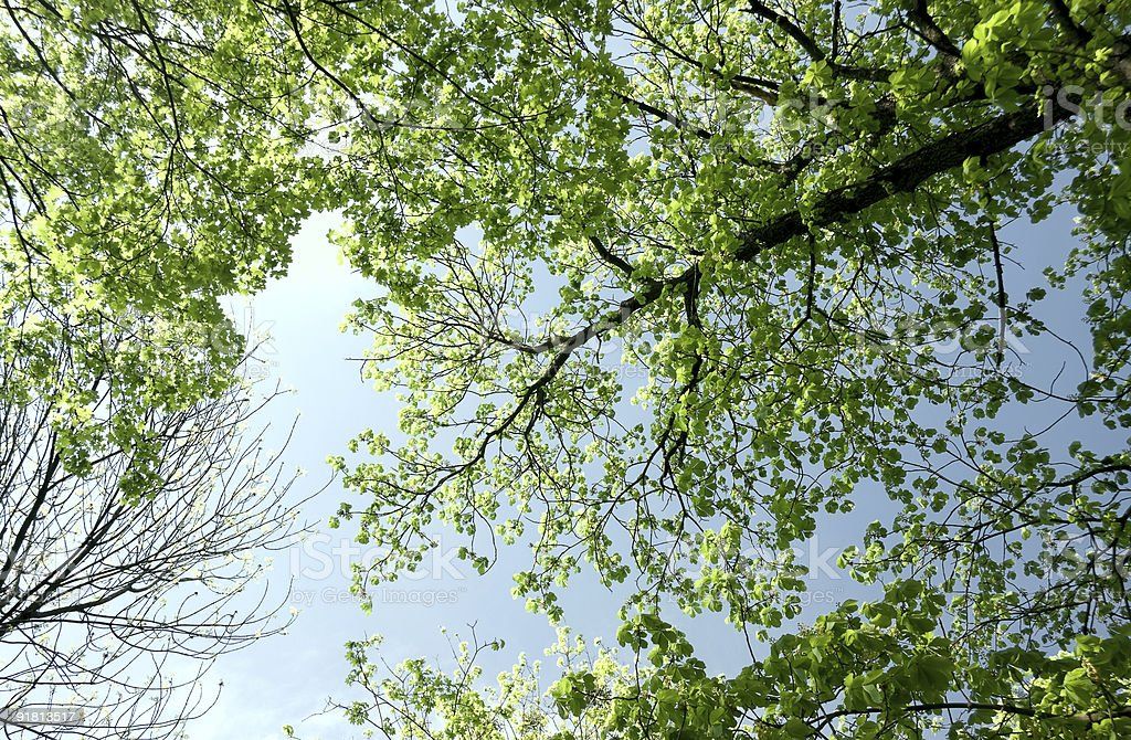 Forest in the spring royalty-free stock photo