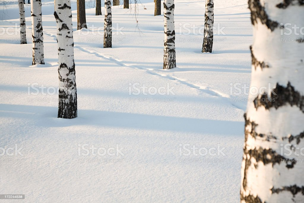 Forest in the winter with snow on the ground royalty-free stock photo
