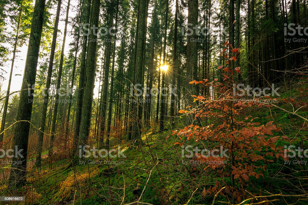Forest in the Wutach Valley stock photo