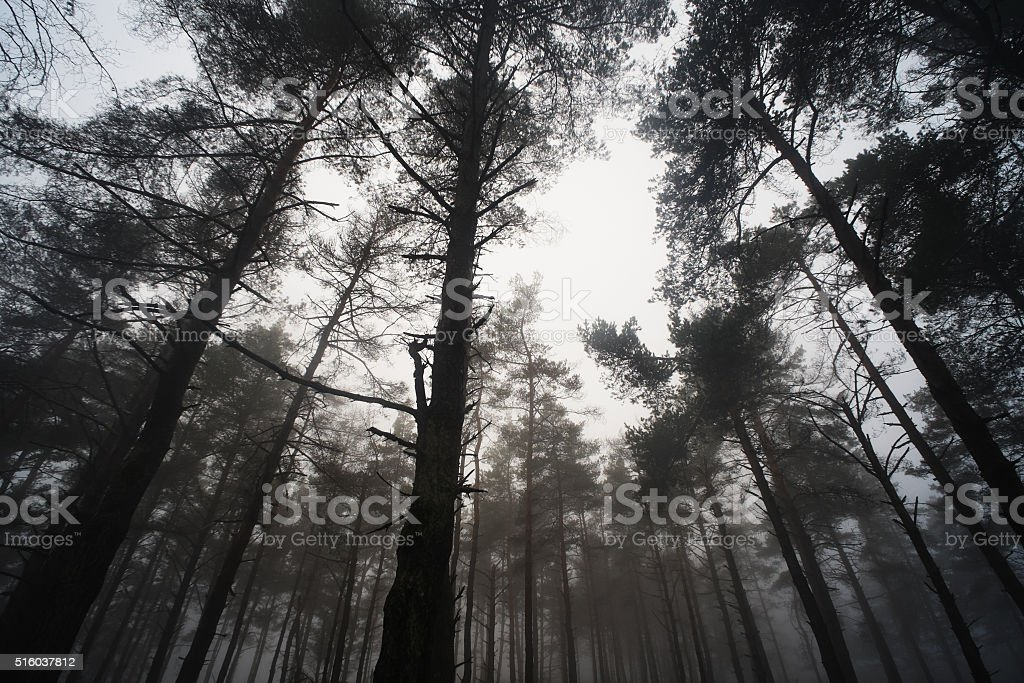Forest in Tré-os-Montes stock photo