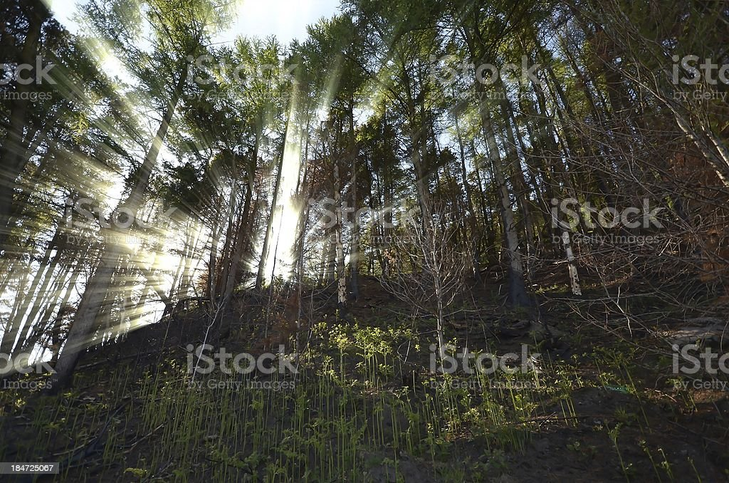 Forest in Wales royalty-free stock photo