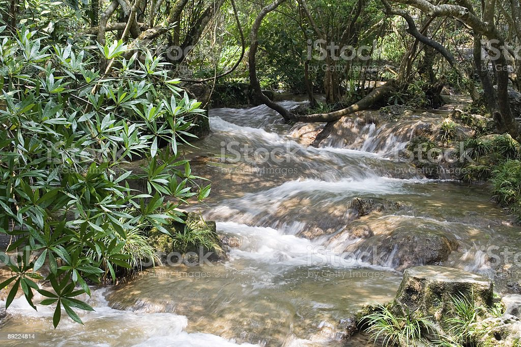 Forest in water at Libo, China stock photo