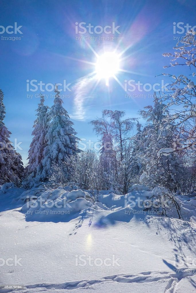 forest in winter and sun stock photo