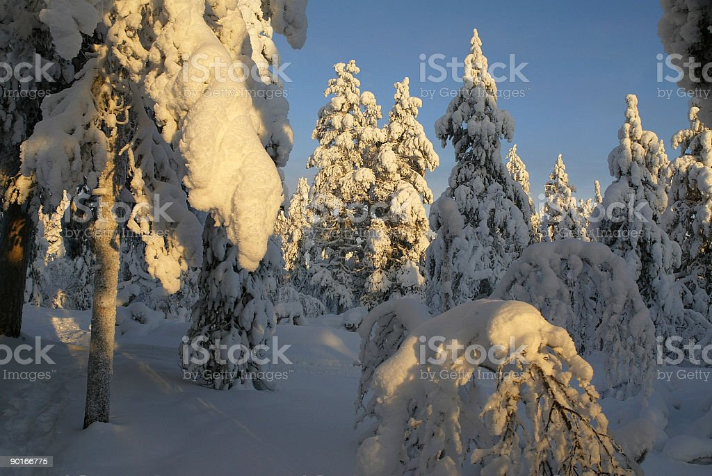forest in winter landscape finland europe royalty-free stock photo