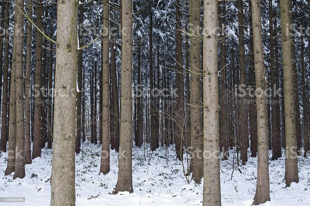 Las w zimie zbiór zdjęć royalty-free