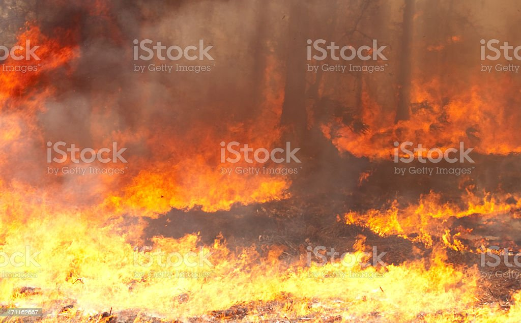 Forest Inferno royalty-free stock photo