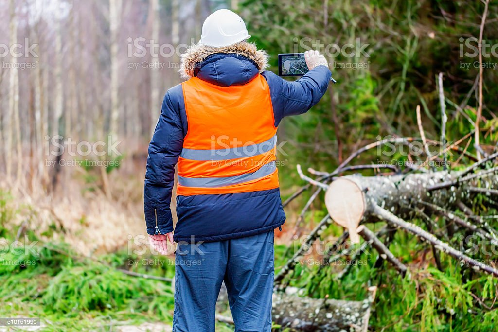 Forest inspector using tablet PC near tree in forest stock photo