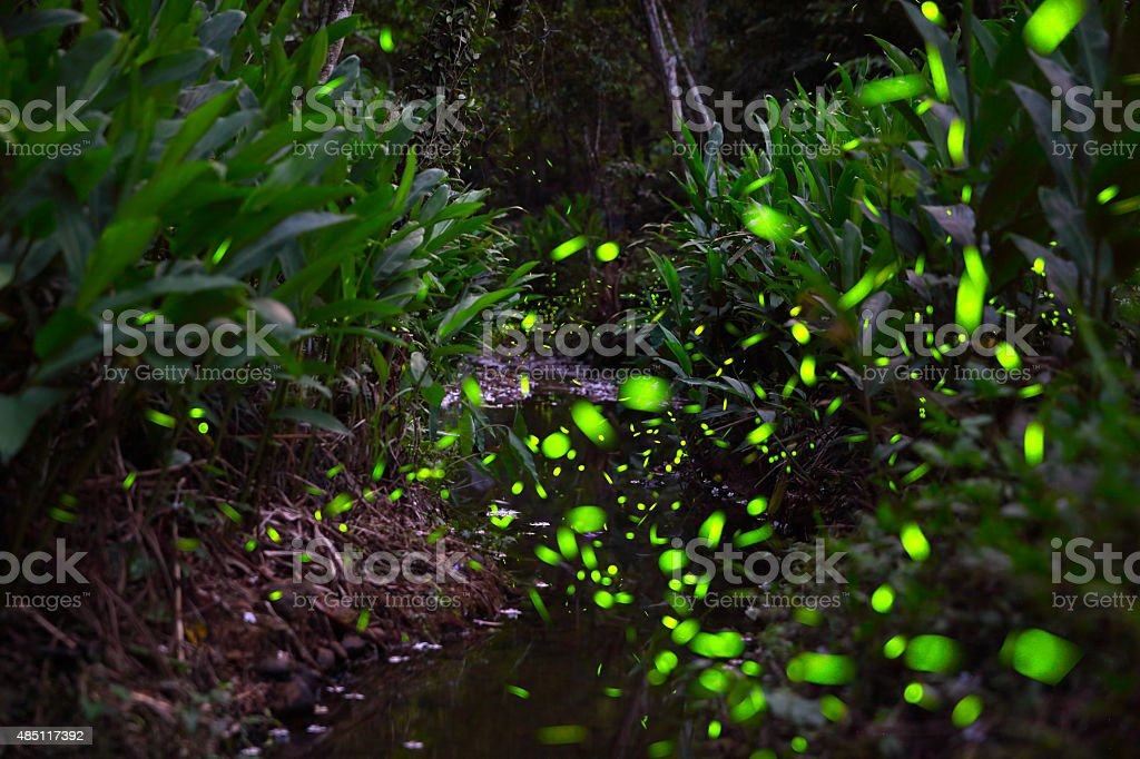 Forest is lit up by the darting fireflies stock photo