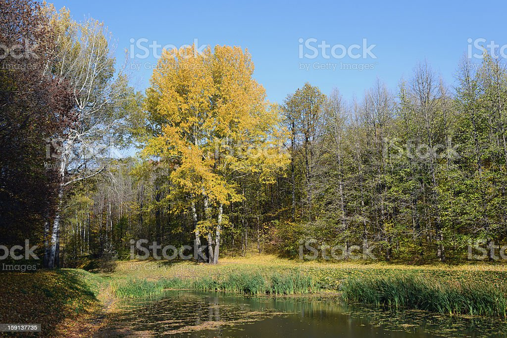 Forest lake in autumn day royalty-free stock photo