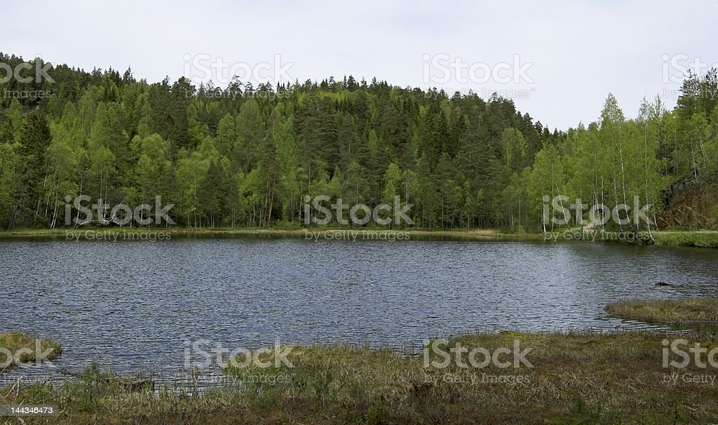 Forest Lake in Summer stock photo