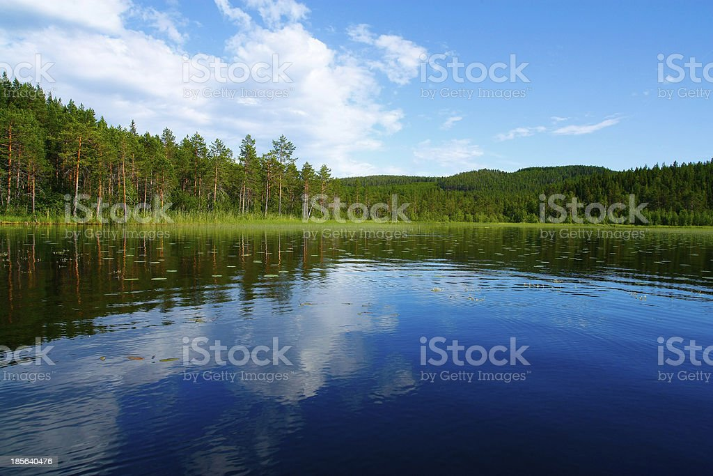 Forest lake in Sweden stock photo