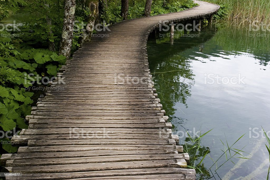 Forest & lake path royalty-free stock photo