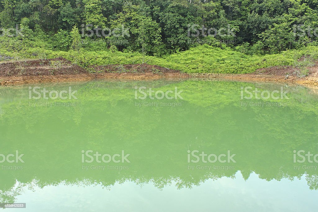 Forest lake royalty-free stock photo