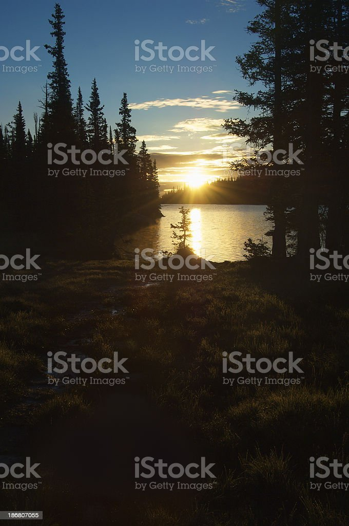 Forest lake sunrise. Grasses with Shimmering Dew in Foreground royalty-free stock photo