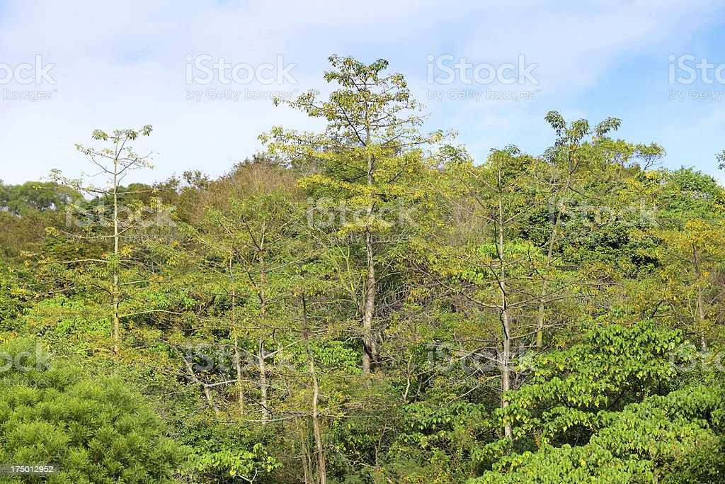 forest Landscape royalty-free stock photo