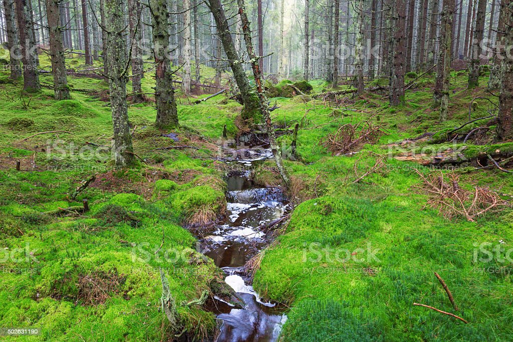 Forest landscape with a creek stock photo