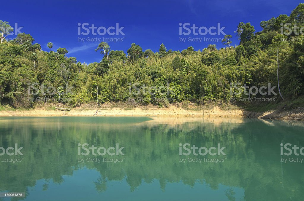 Forest landscape with a reflection in the lake royalty-free stock photo