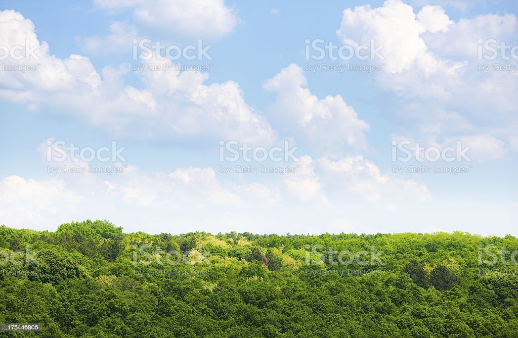 Forest landscape with beautiful scenic clouds overlooking it stock photo