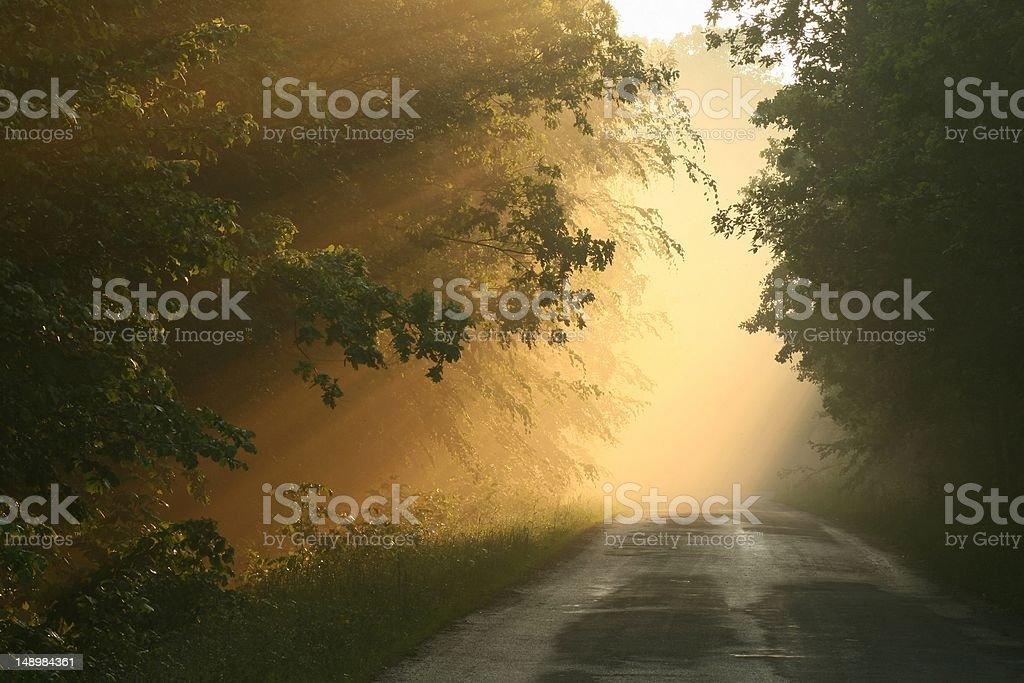 Forest lane at dusk stock photo