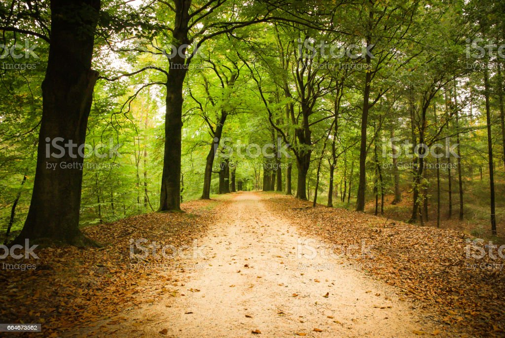 Forest lane stock photo