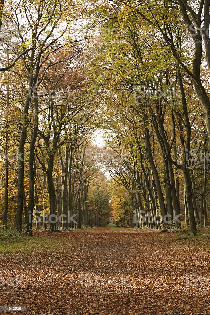 Forest lane surrounded by trees royalty-free stock photo