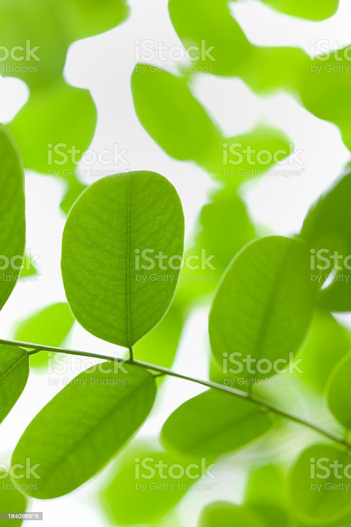 Forest leaf background. stock photo