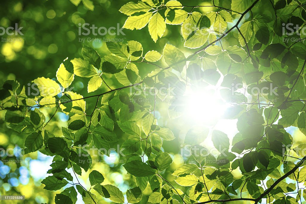 Forest leaves royalty-free stock photo