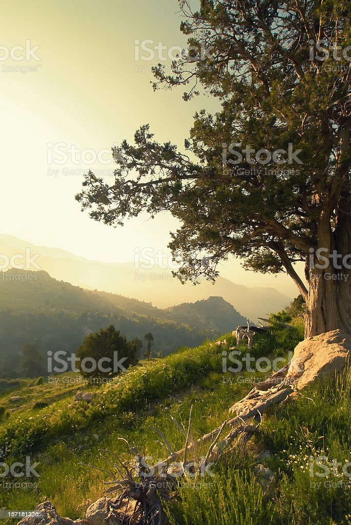 Forest Life royalty-free stock photo