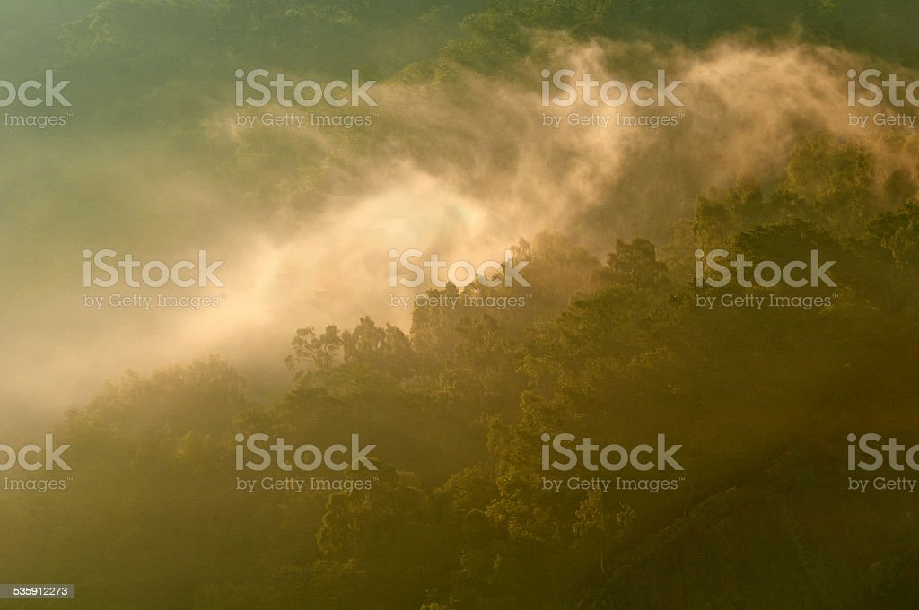 Forest Light. stock photo