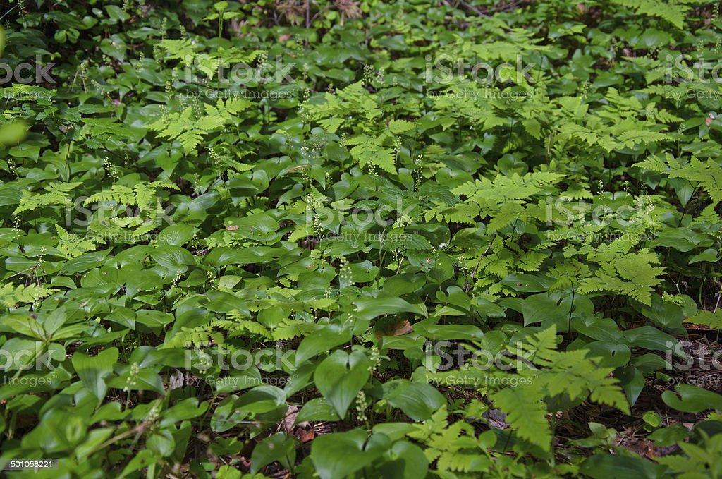 Floresta de resíduos foto de stock royalty-free