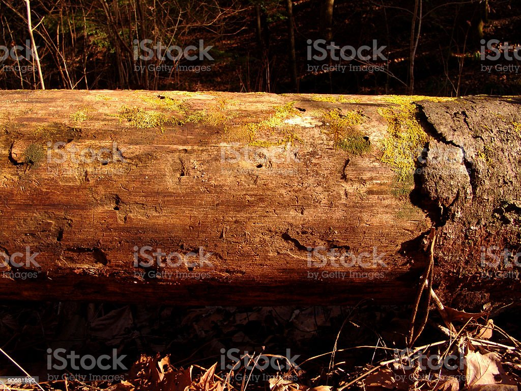 Forest Log royalty-free stock photo