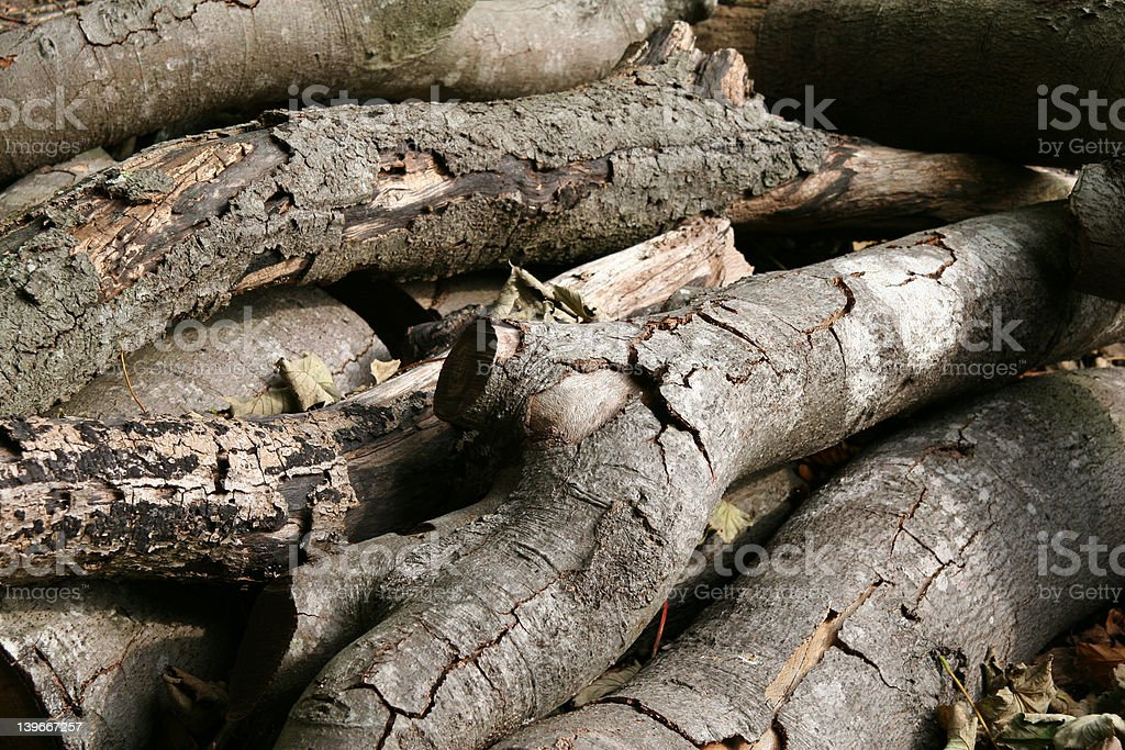 Forest logs stock photo