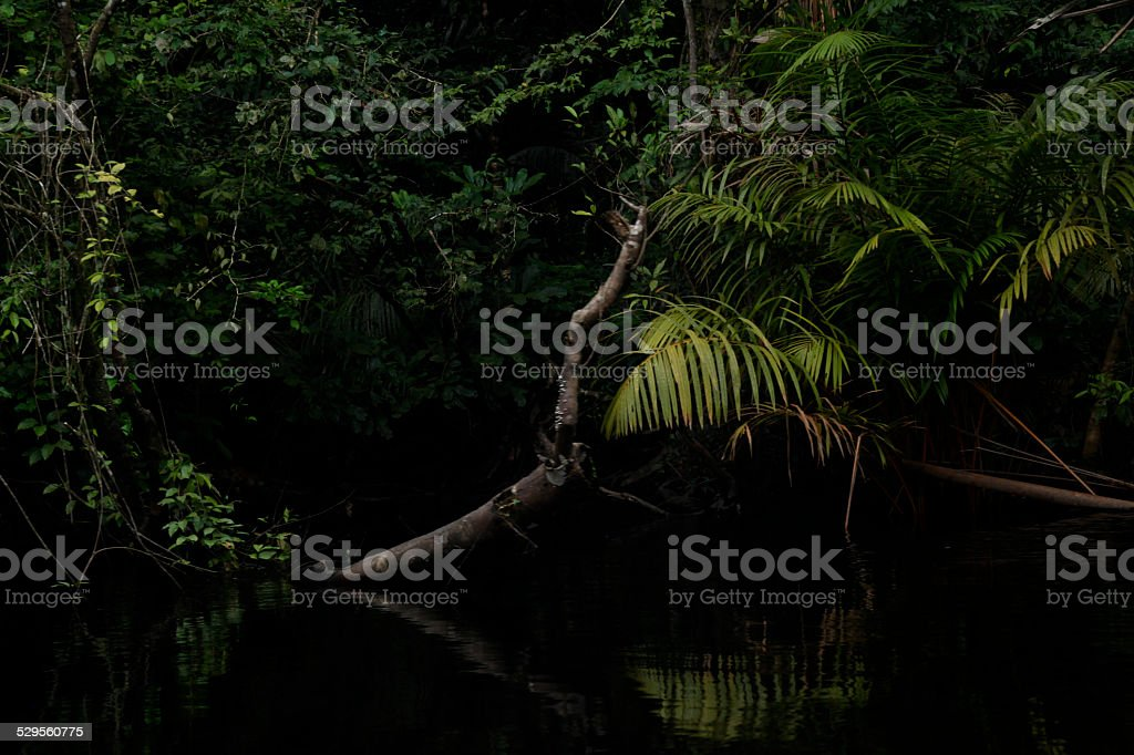 Masa de bosque en rio costa rica stock photo