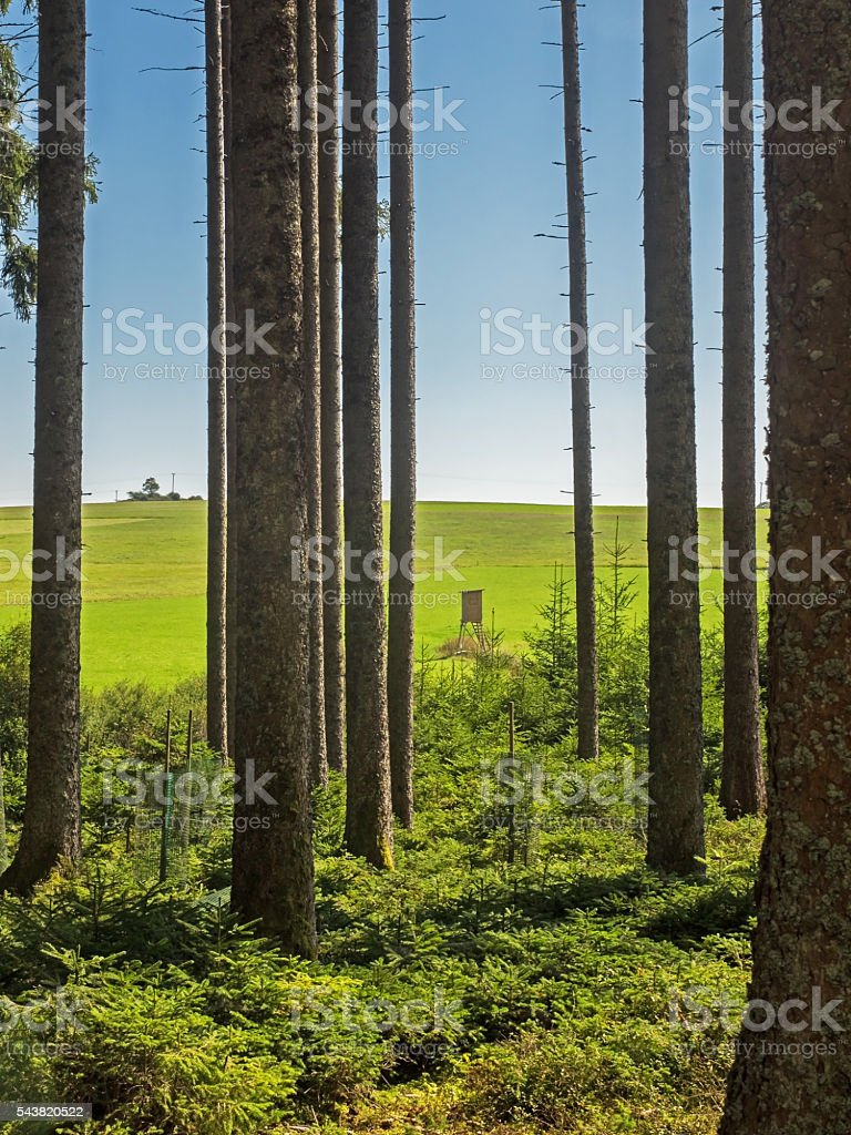 Forest, meadow and high seat in Black Forest stock photo
