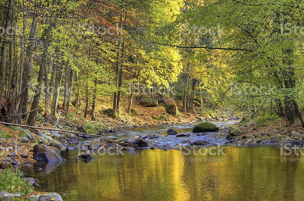 Forest Mirrored in a River royalty-free stock photo