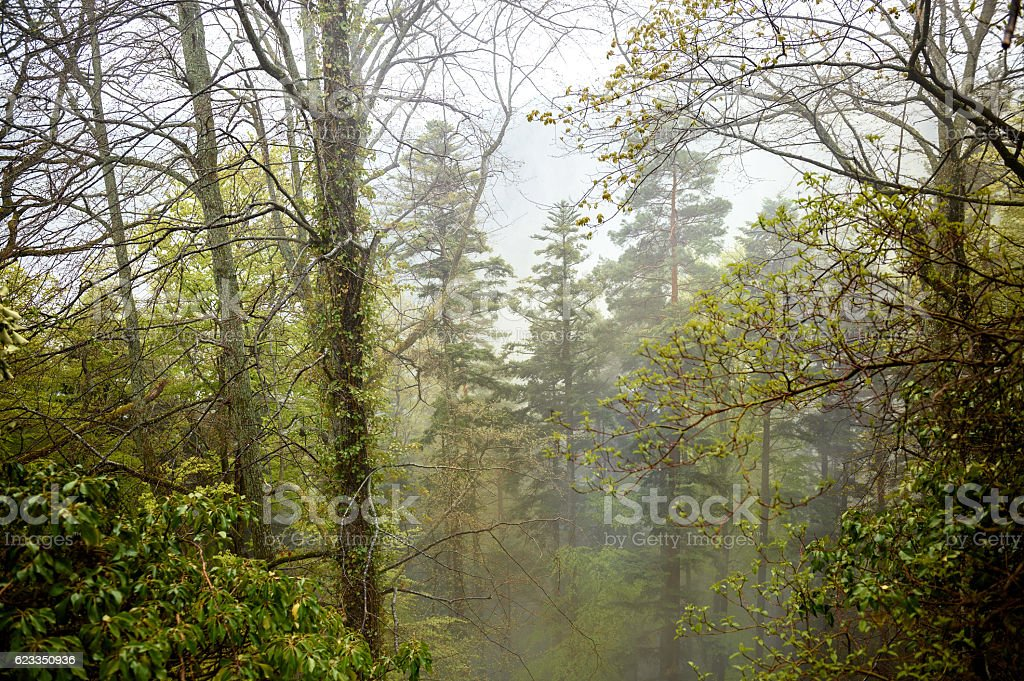 Forest, mist and moss on stones elevated view stock photo