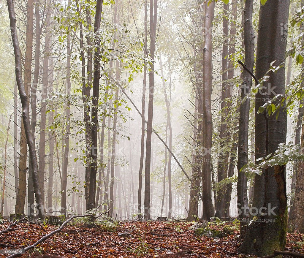 Forest mist royalty-free stock photo