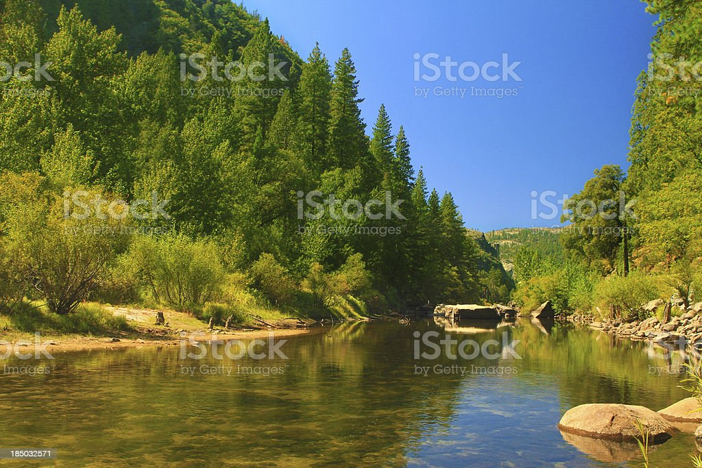 Forest morning stock photo