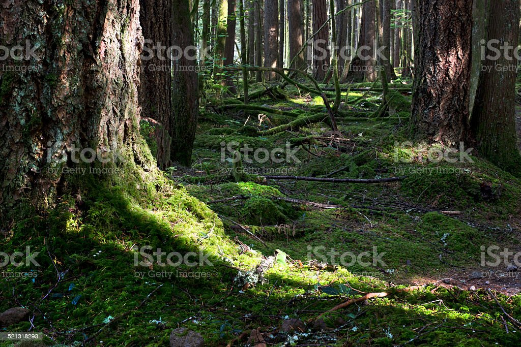 Forest - mossed floor stock photo