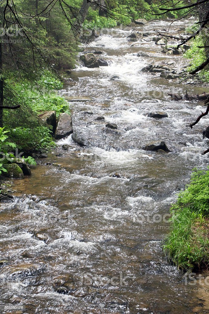 forest mountain river stock photo