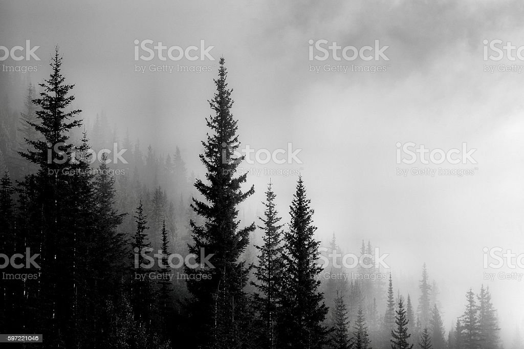 Forest Mountain Valley stock photo