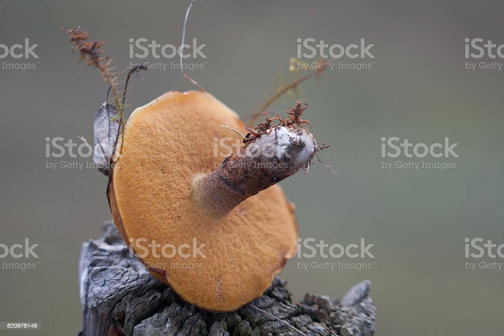 Forest Mushroom stock photo