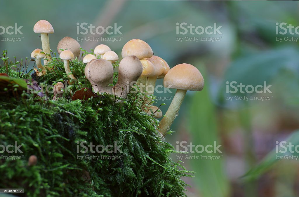 Forest Mushrooms stock photo