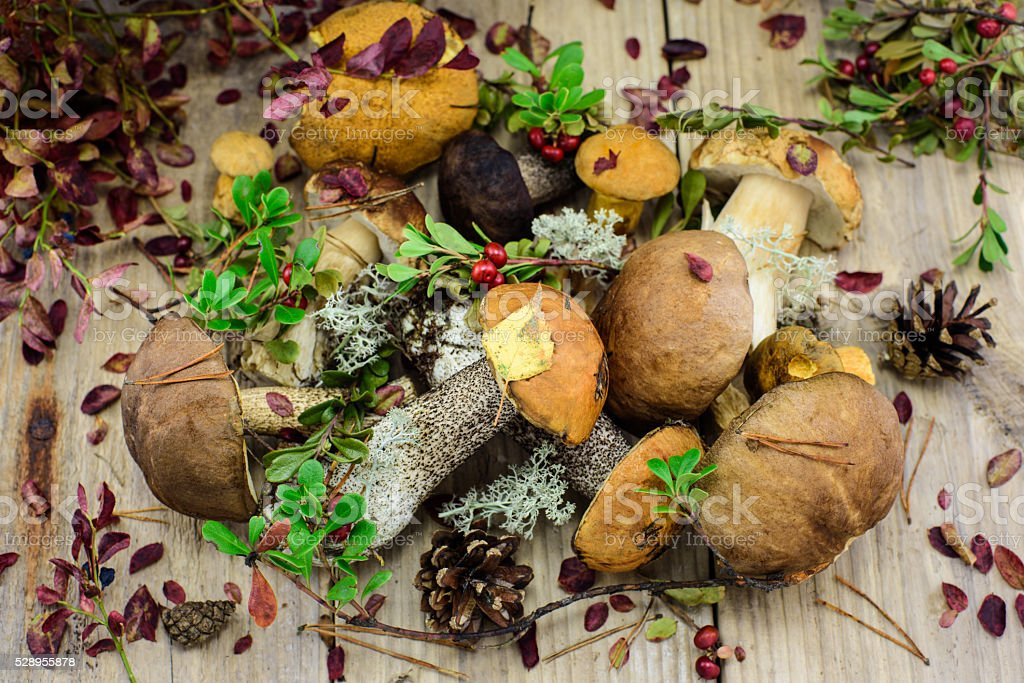 Forest mushrooms with autumn leaves. stock photo