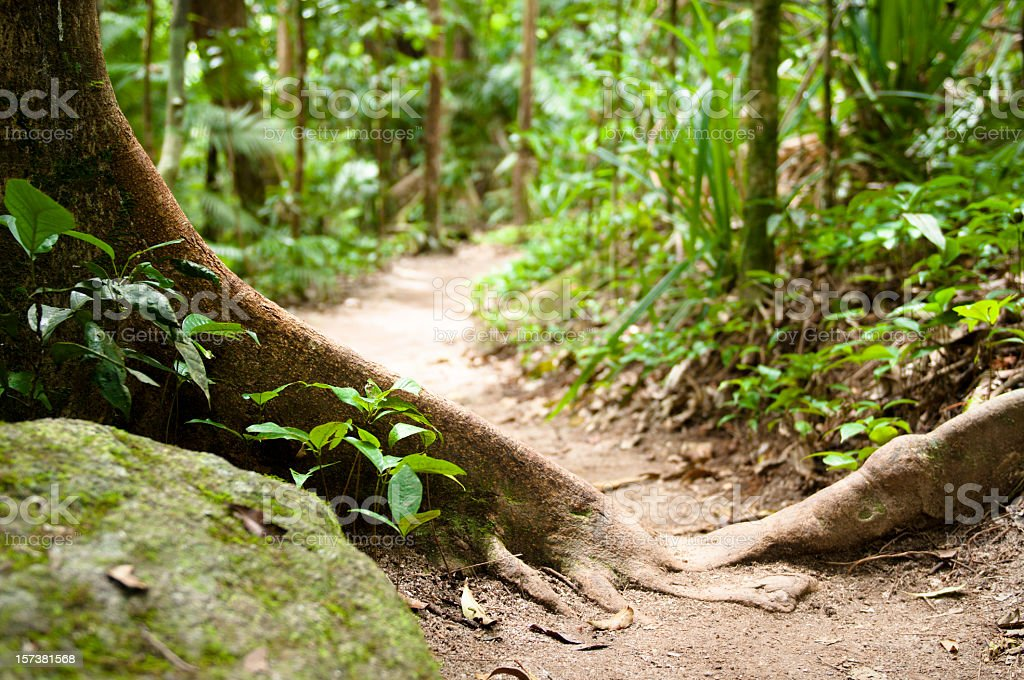 Forest Nature Path royalty-free stock photo