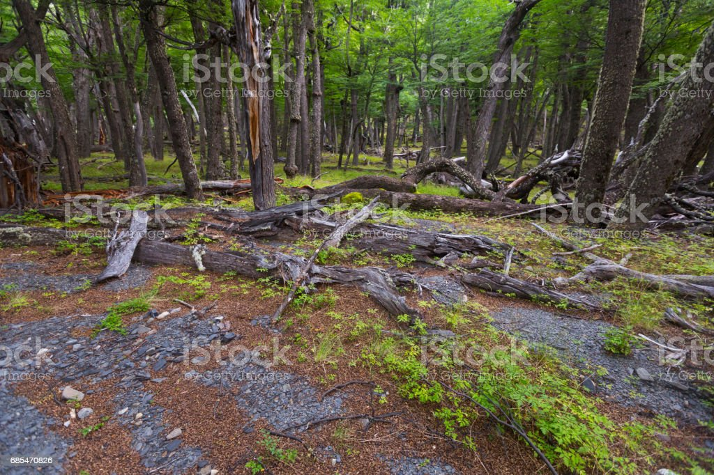 Forest near foot of Andes mountains stock photo