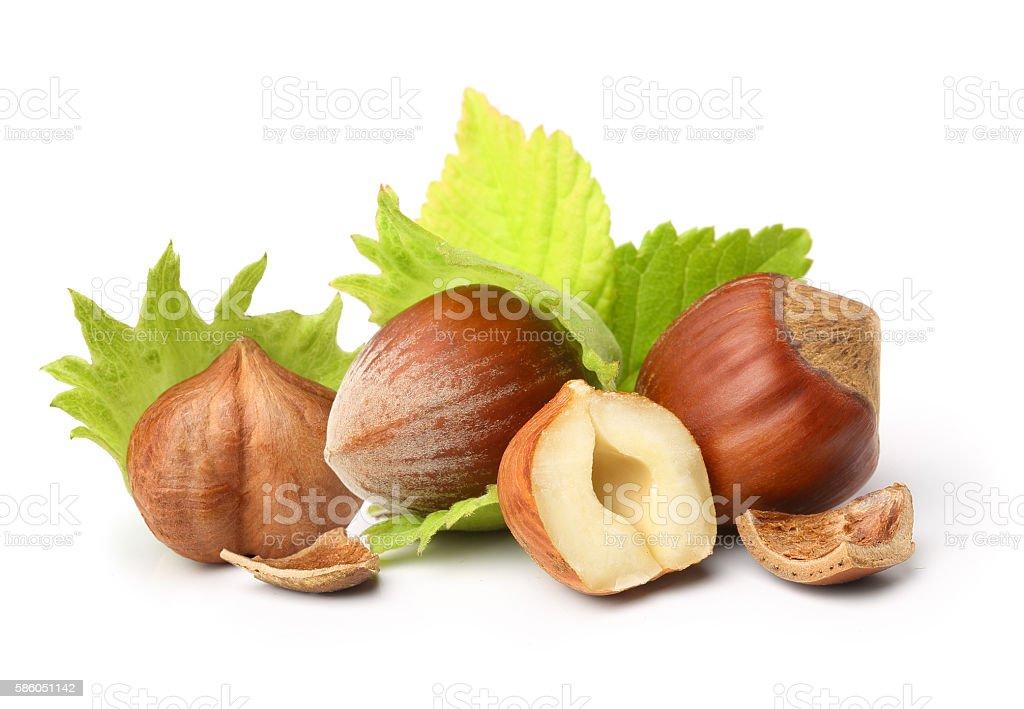 Forest nuts hazelnuts stock photo