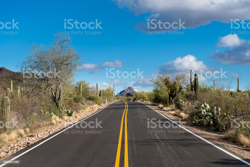 Forest of cactus in Saguaro National Park West Tucson stock photo